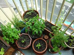 vegetable u0026 herb garden it u0027s the end of summer and all th u2026 flickr