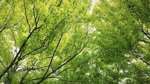 free photo wood trees plants leaf leaves free image on