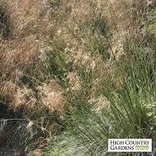 89 best landscape decorative grasses images on