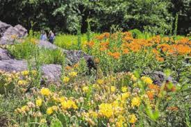 native plants of new york no plant is an island think of plant groups not specimens
