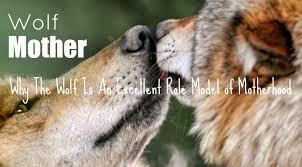 mothers wolves excellent motherhood models
