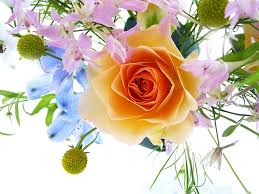 wallpapers flowers free 76