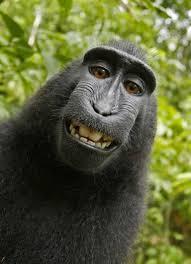 Us Court Of Appeals Map Monkey Selfie U0027 Case Headed To U S Court Of Appeals Peta