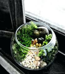 planters clear glass bowl planter fish large hutch glass bowl