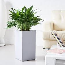 Low Light House Plant Low Light Plants Delivery In Nyc Jersey City And Hoboken