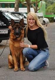 belgian shepherd kijiji heidi klum u0026 her gsds freddie u0026 max german shepherd with famous