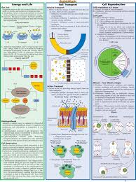 stem cells infographic science on cells pinterest