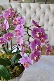 Orchid Cut Flowers - how to make a simple and beautiful orchid arrangement decor gold