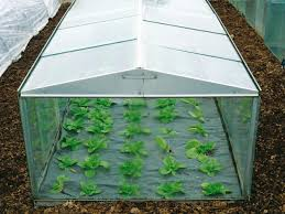cloches and cold frames diy
