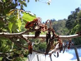 pests diseases proarb