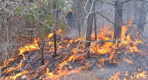 Wildfire Case Drop Rate by Experts Warn Of Cape Wildfire Dangers News Capecodtimes Com