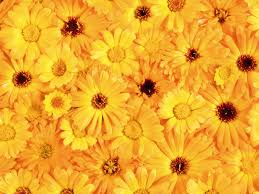 yellow flowers flowers texture flowers flower background flower texture