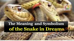 the dream of snakes dream of snake meaning dream of snake youtube