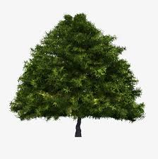 decorative pine picture Pine Trees Decoration Image PNG Image