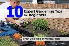 gardening tips 10 expert gardening tips for beginners