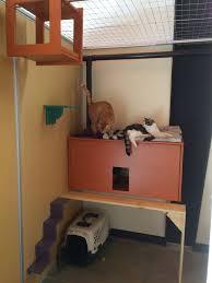 boarding for cats colorado springs pet hotel catagonia
