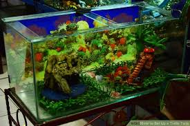 2 easy ways to set up a turtle tank with pictures