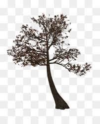free twig tree albom clip vision tree grass png