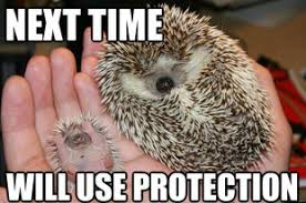 Baby Memes For New Moms - 25 adorable hedgehog memes
