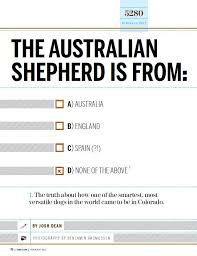 australian shepherd kills child las rocosa australian shepherds