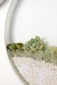 vertical garden planter for succulents and air plants gardens