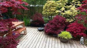 tips for planting different types of trees great ideas for