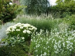 White Hydrangeas The 25 Best White Hydrangea Garden Ideas On Pinterest