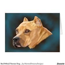 american pitbull terrier breeders st louis american pitbull terrier hashtag images on gramunion