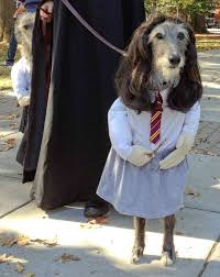 Halloween Costume Ideas Dogs 29 Pictures Funny Dog Costumes Halloween Weknowmemes