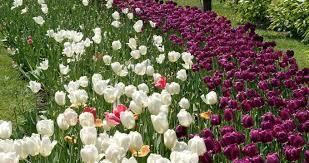 san antonio botanical garden in san antonio texas