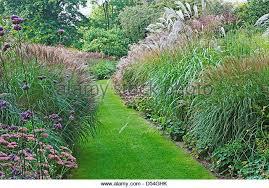 ornamental grasses border grasses stock photos ornamental