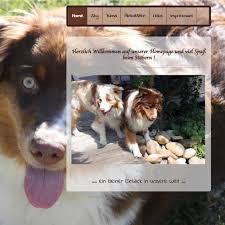 australian shepherd 5 monate create your own free website with our website builder page4