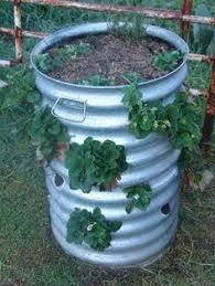 Diy Strawberry Planter by Diy Strawberry Planter Our Garden Pinterest Strawberry