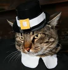 61 best thanksgiving and cats images on