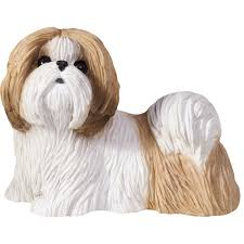 sandicast original size gold and white shih tzu