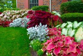 Flower Shrubs For Shaded Areas - colorful shade plants for landscaping outdoors pinterest