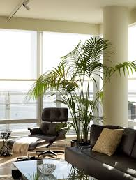 sumptuous artificial palm trees in spaces contemporary with next