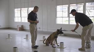 belgian sheepdog massachusetts marines mil unit directory