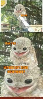 Potoo Bird Meme - thanks meme bird meme best of the funny meme