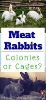 best 25 meat rabbits ideas on pinterest raising rabbits