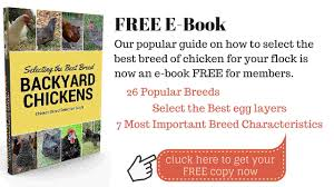Backyard Laying Chickens by Best Egg Laying Chickens Backyard Chicken Zone