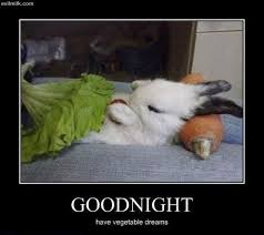 Goodnight Meme Cute - good night cute bunny pictures