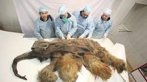 korean scientists clone woolly mammoth