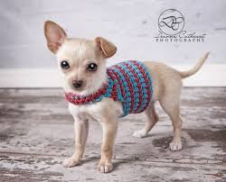 22 best chihuahua knitting images on pinterest dogs crochet dog