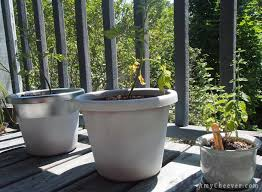 Faux Stone Planters by Diy Faux Stone Planters Amycheever Com