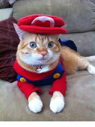 28 halloween costumes for cats that will put a smile on your face