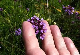 purple petal flower plant free image peakpx