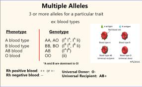 multiple alleles bowenbiology