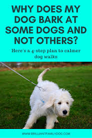 how to get dog to stop barking why does my dog bark at some dogs and not others 4 steps to