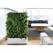 indoor wall garden indoor vertical garden amazon com